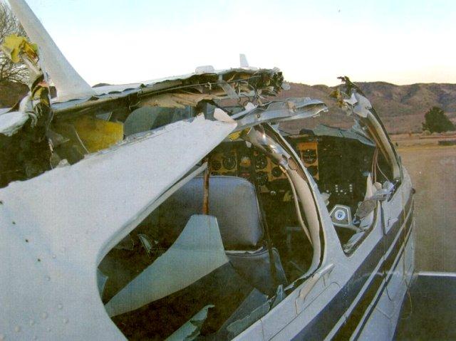 airplaneGooseMidAir2.jpg